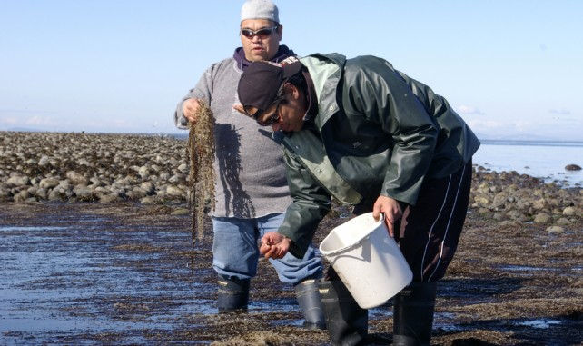 The Tla'amin Nation is experienced in aquaculture and aqua farming.